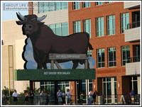 Highlight for album: Durham Bulls